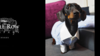 Puppy Love: 44% Of UK Dog Owners Would Wear Matching […]