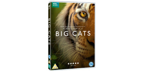 BBC HIT NATURAL HISTORY SERIES BIG CATS TO BE RELEASED […]