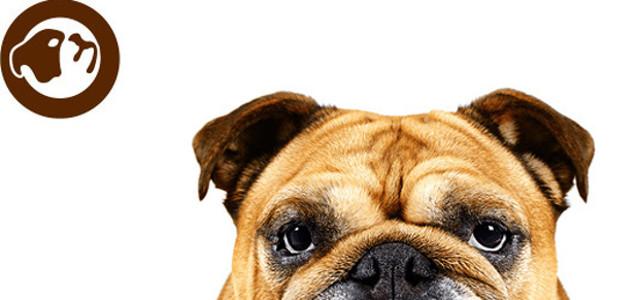 Help dad maintain his cute bulldog looks! The bulldog range […]