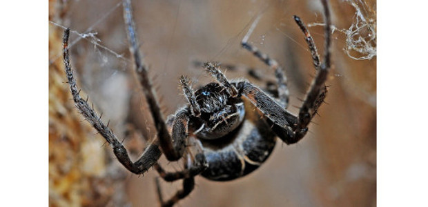 Get rid of spiders – 6 Natural and Effective Methods […]