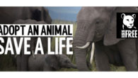 Please Help the Animals to Survive… Christmas Adoption Packs & […]