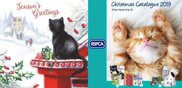12 gifts of Christmas help animals in need Gifts for […]