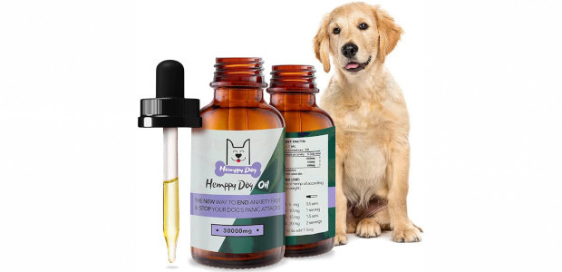 Dogs Experience Stress Just Like You See more and buy […]