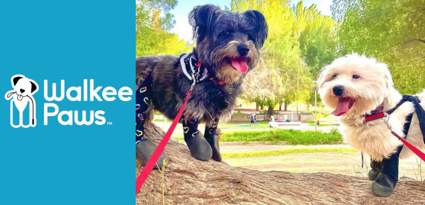 No Tricks, All Treats with Walkee Paws! Turn your Walkee […]